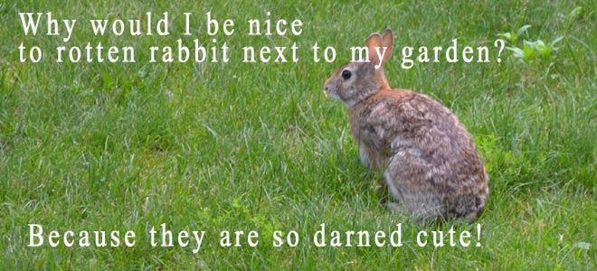 rotten-rabbit660x300