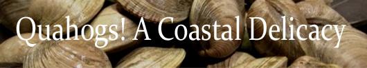 Quahogs, a coastal delicacy